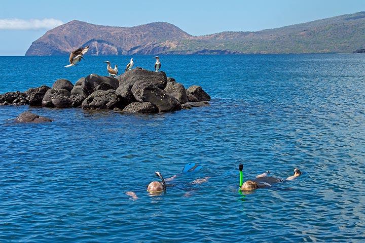 galapagos-activity-snorkel