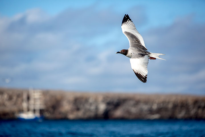 galapagos-isabela-island-birds