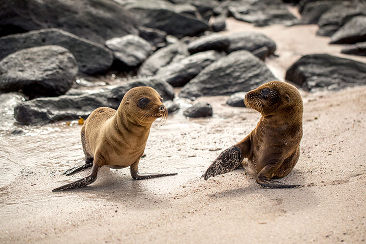 Galapagos, Islands, Isabela