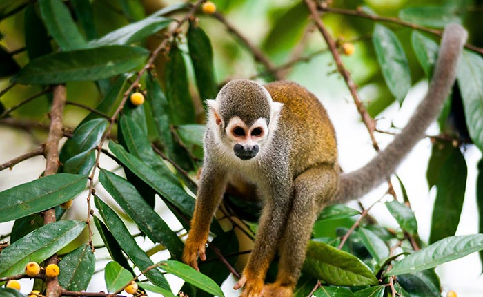 laselva-ecolodge-monkey