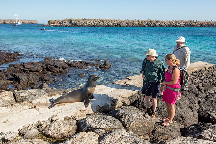 wildlife-hopping-galapagos-seals