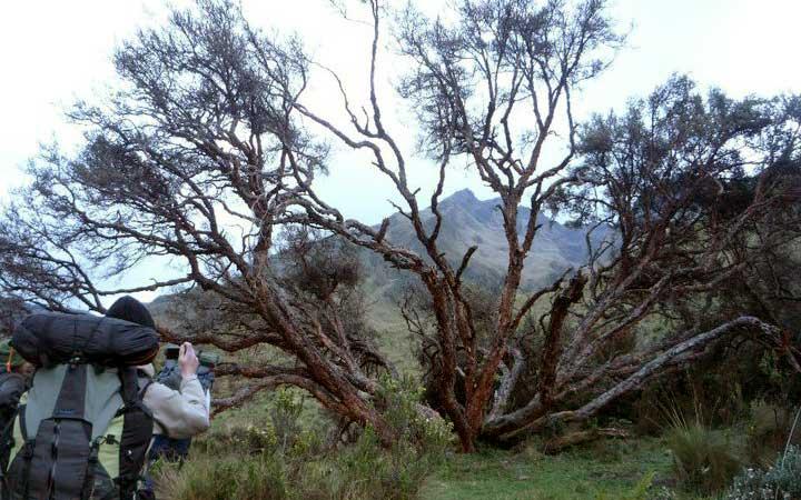 altar-trekking-old-tree