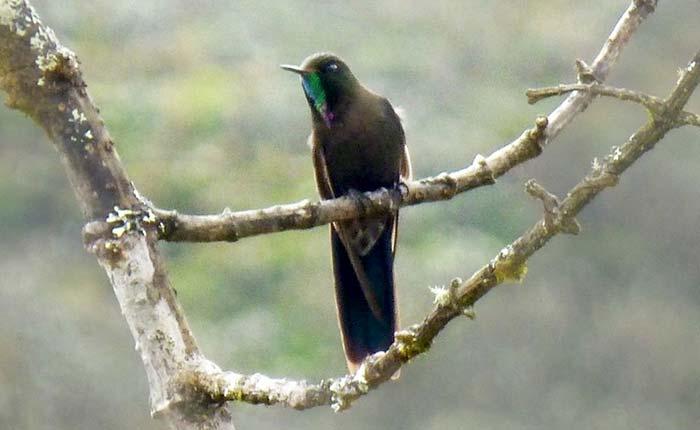 bird-tandayapa-forest