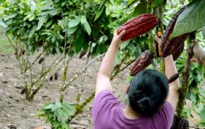 Read more about the article Chocolate Tour – Full Day