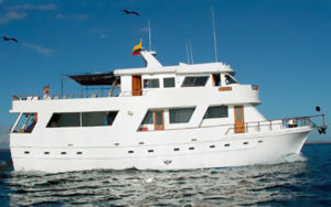 Darwin Motor Yacht