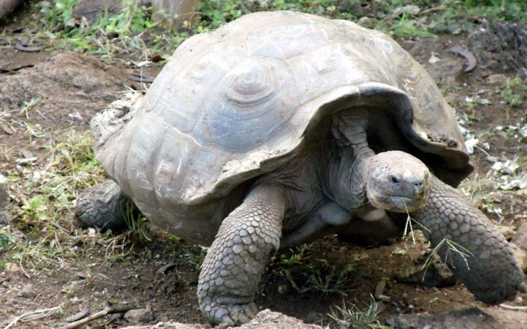 galapagos-islands-wildlife-ecuador