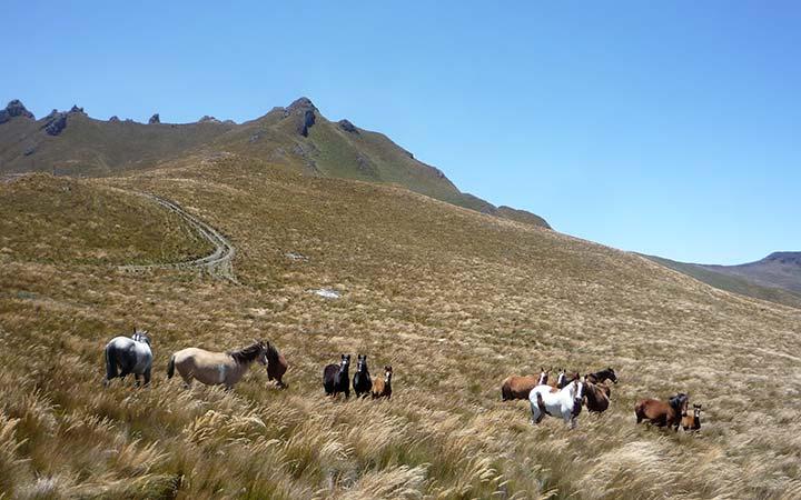 puntas-mountains-horses