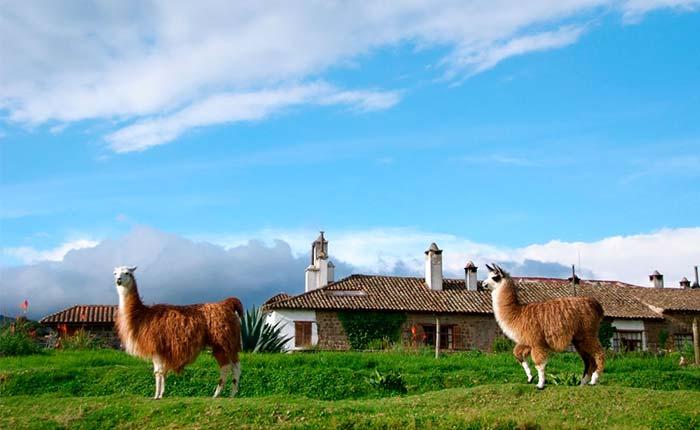 san-agustin-de-callo-alpaca