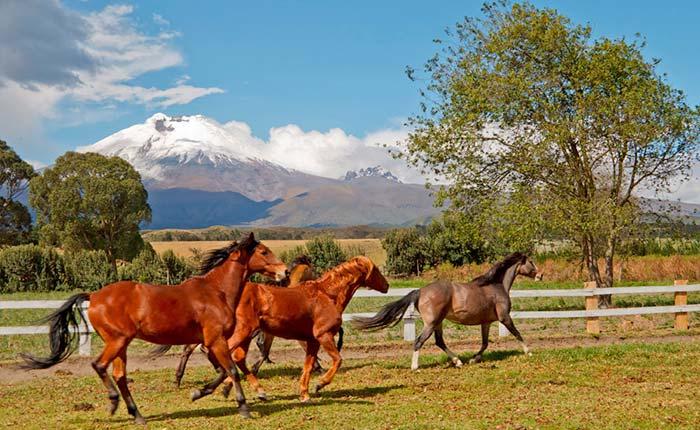 san-agustin-de-callo-horse