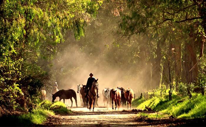 zuleta-ranch-horses