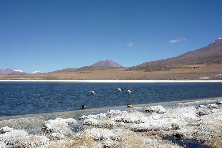bolivia-andean-lake-birds