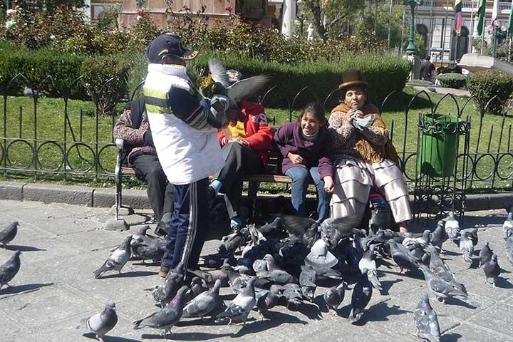 la-paz-square-pigeons