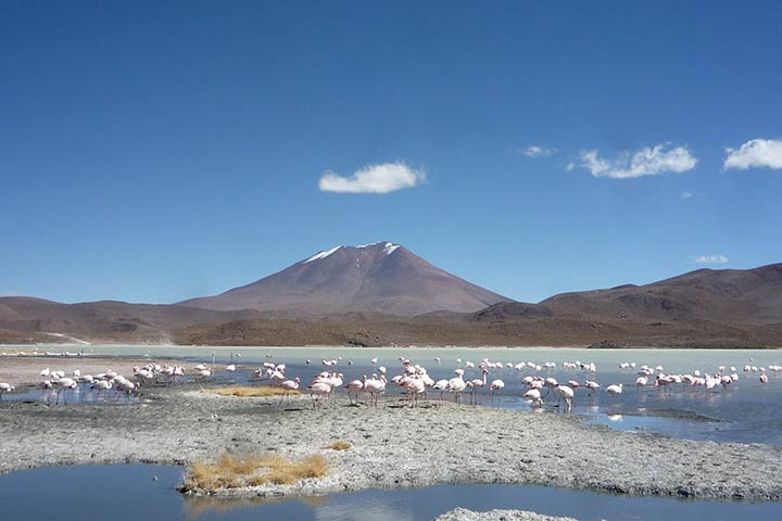 lagoons-flamingos