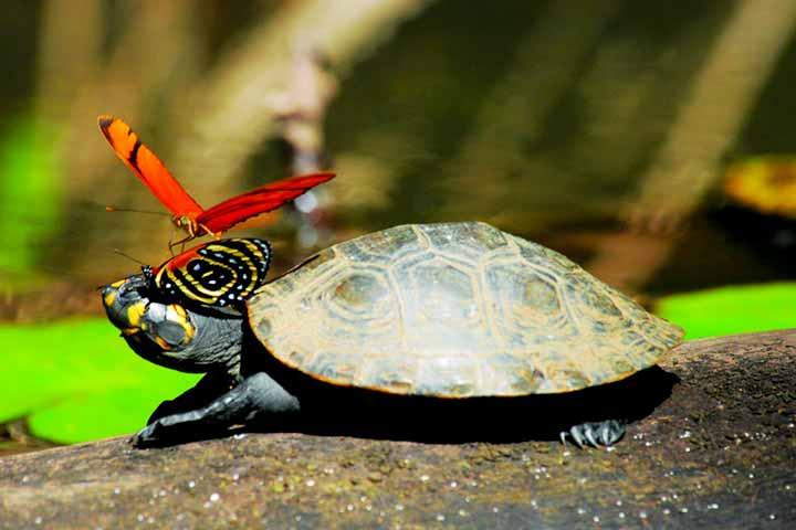 peru-amazon-reserve-tortoise