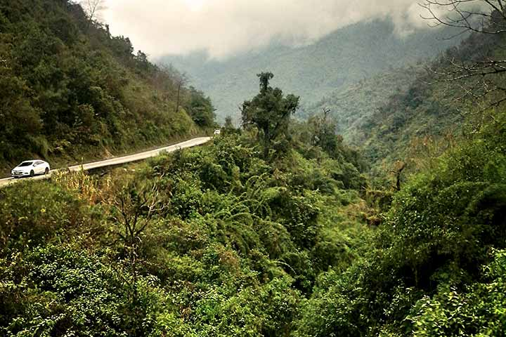 yungas-forest
