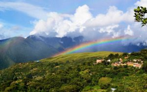 Read more about the article Yungas-Coroido